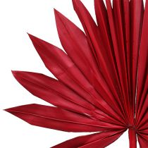 Palmspear Sun mini rojo 50pcs