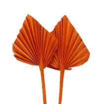 Palmspear mini naranja 100pcs