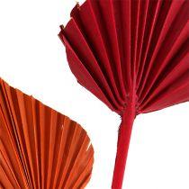 Palmspear surtido rojo / naranja 50ud
