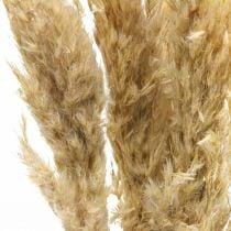 Decoración seca hierba de pampa, seca, blanqueada 70-75cm 6 tallos