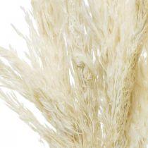 Hierba de pampa seca blanqueada seca decoración 65-75cm 6 piezas en un manojo