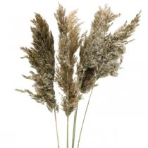 Hierba de pampa seca natural Para secar ramo 70-75cm 6pcs