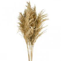 Floristería seca natural seca de pampas, paquete de 75 cm con 10 piezas