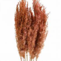 Pampas hierba seca rosa flores secas 75 cm paquete de 10 piezas