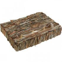 Recipiente para plantas con base de decoración otoñal de corteza de pino 35 × 25cm H6cm