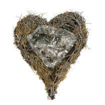 Planta corazón de vid y musgo naturaleza 20cm x 14cm