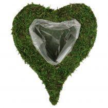 Planta corazón musgo 28cm x 23cm