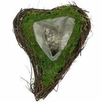 Planta de vid de corazón, musgo 26cm x 36m H9cm