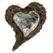 Planta corazón de vid 30cm x 40cm x7,5cm naturaleza