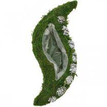 Jardinera musgo y conos verde ondulado, blanco lavado 41 × 15cm