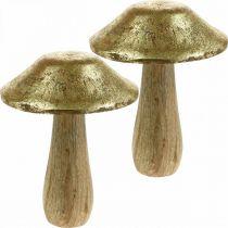 Seta mango madera oro, setas decorativas naturales grandes Ø12cm H15cm 2ud