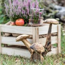 Setas ciruela madera Al. 27 cm