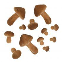 Champiñones Light Brown Mix 2cm - 8cm 12pcs
