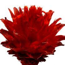 Plumosum 1 rojo 25pcs