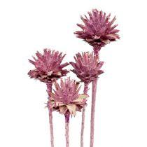 Leucospermum 1 mora congelada 25uds