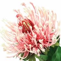 Protea Rosa Artificial 73cm
