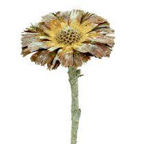 Repens roseta verde mate 8cm - 9cm 25pcs