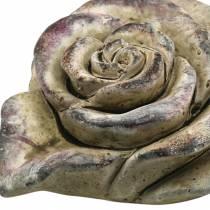 Rosa hormigón corazón gris, violeta Ø13 H5cm 3ud