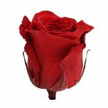 Rosas infinitas grandes Ø5.5-6cm rojo 6pcs