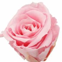 Rosas eternas medianas Ø4-4.5cm rosa 8pcs