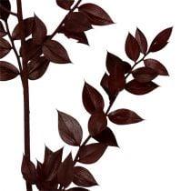 Ruscus ramitas rojo oscuro 75cm - 95cm 1kg