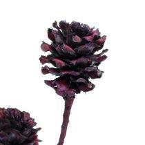 Ramas de Salignum con conos Burdeos 25uds