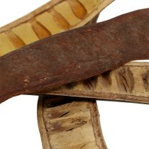 Vainas Scaletta natural 25cm - 50cm 25pcs