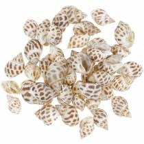 Deco caracoles marinos naturaleza 1-4cm 1kg