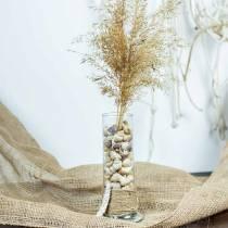 Mejillones caracol natural 1kg
