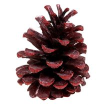 Conos de pino negro esmerilado rojo 5-7cm 1kg