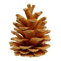 Crema de pino negro 5-8cm 1kg