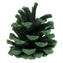 Conos de pino negro verde mate 5-7cm 1kg