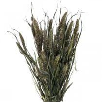 Flores secas Setaria antracita natural mijo racimo 100g