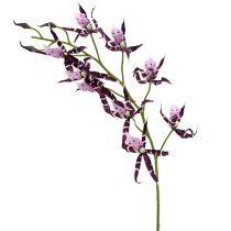 Araña orquídeas Brassia púrpura 108cm 3pcs