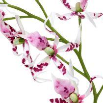 Orquídeas Araña Brassia Rosa-Blanco 108cm 3pcs