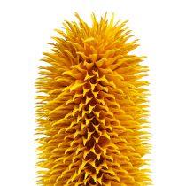 Cardos puntiagudos Tallos naturales Amarillo 1kg