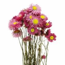 Flor de paja en racimo Flores rosadas secas 25g