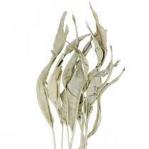 Strelitzia hojas secas verde esmerilado 45-80cm 10pcs