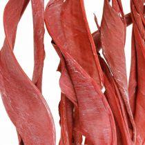 Strelitzia deja flores secas esmeriladas rojas 45-80cm 10pcs