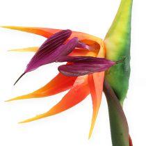 Strelitzia Ave del Paraíso flor 62cm