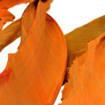 Strelitzia Hojas Naranja 120cm 20pcs