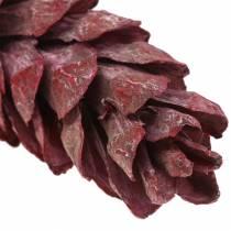 Conos Strobus decoración natural rojo 15cm - 20cm 50pcs
