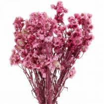 Flores secas Rosa Ramo de flores secas Flores secas Rosa Al.21cm