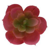 Suculenta Ø5cm Rosa 6pcs