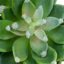 Piedra suculenta Rose Green Ø10cm H11cm 3pcs