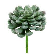 Verde suculento Ø8,5cm L13cm