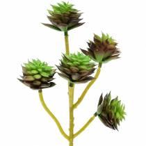 Selección suculenta verde / marrón 35.5cm