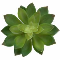 Siempreviva suculenta verde 14cm