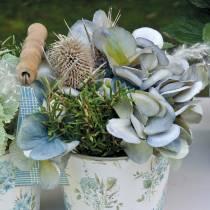 Flores secas cardo blanqueado 60cm 100g