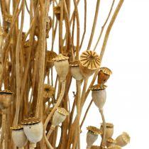 Flores secas cápsulas de amapola paquete de decoración de secado salvaje secado natural 100g